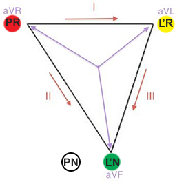 Relation between the limb leads and electrodes in Einthoven triangle