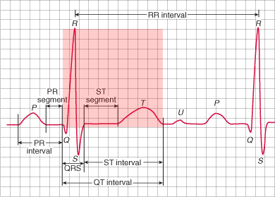 ECG QT interval, from the start of the Q wave to the end of the T wave