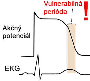 ecg, action potential, vulnerable pariod