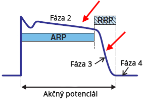 Mechanism of arrhytmias, Early After-depolarization, phase 2 or phase 3