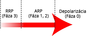 Action potential wavefront, depolarization arrow, RRP, ARP